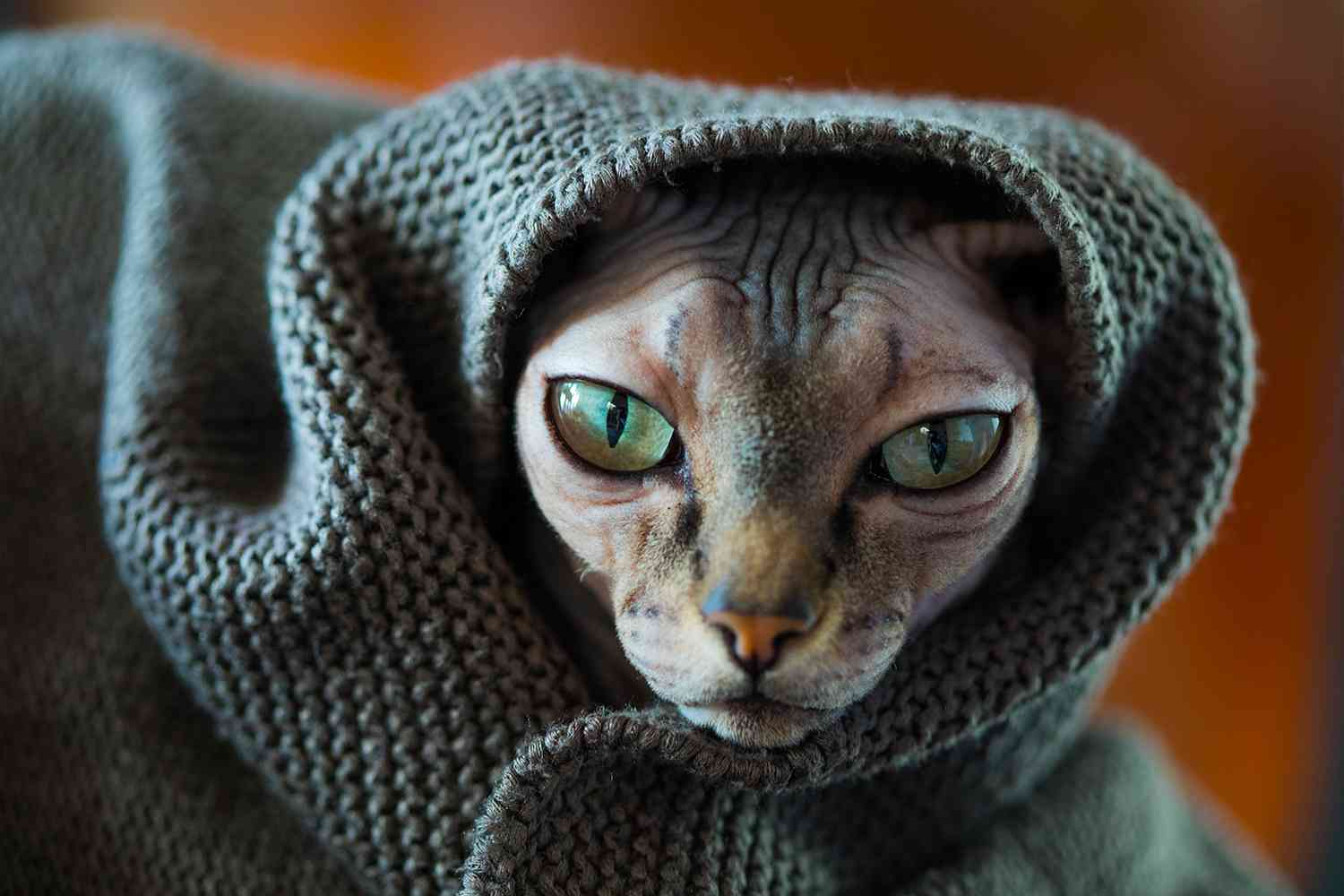 Finally you can buy a Sharia compliant hijab for your cat ...